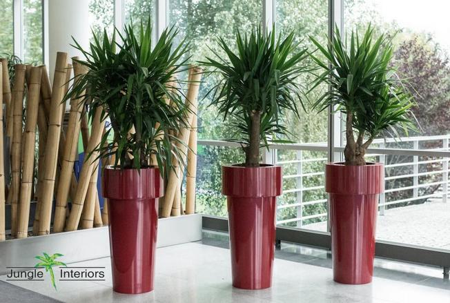 Rostliny v interiéru 2