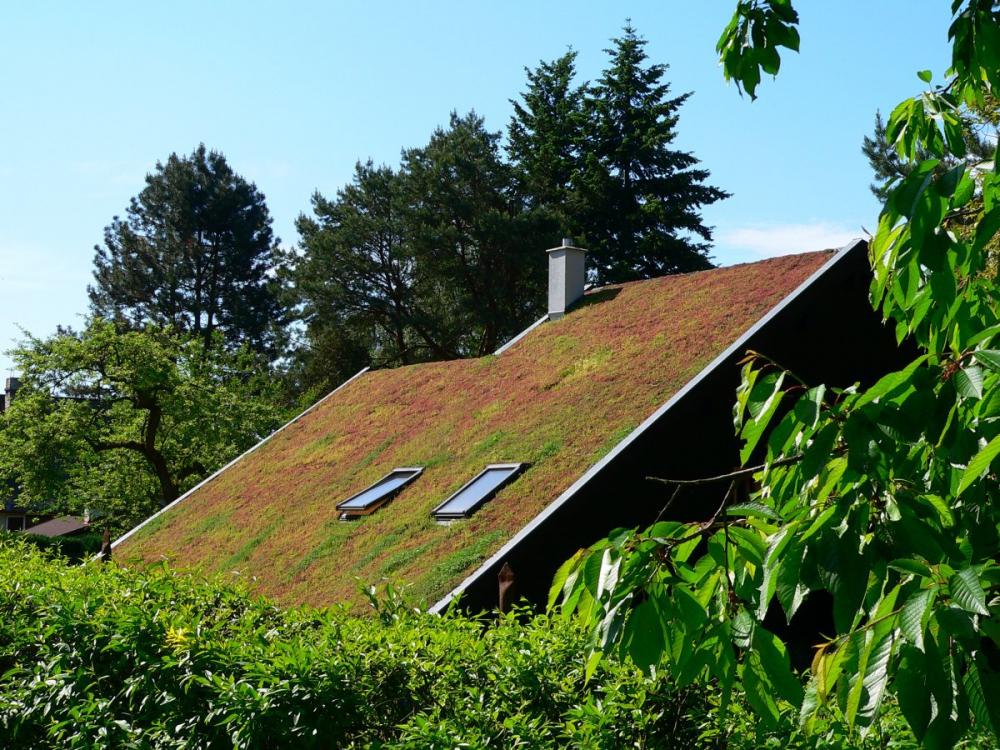 Extenzivní střechy