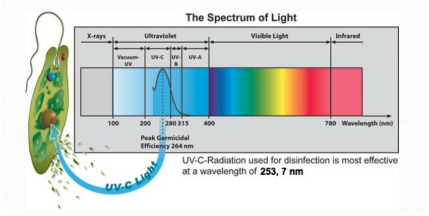 Spektrum světla
