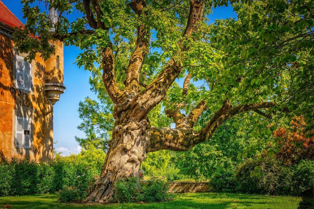 01_strom