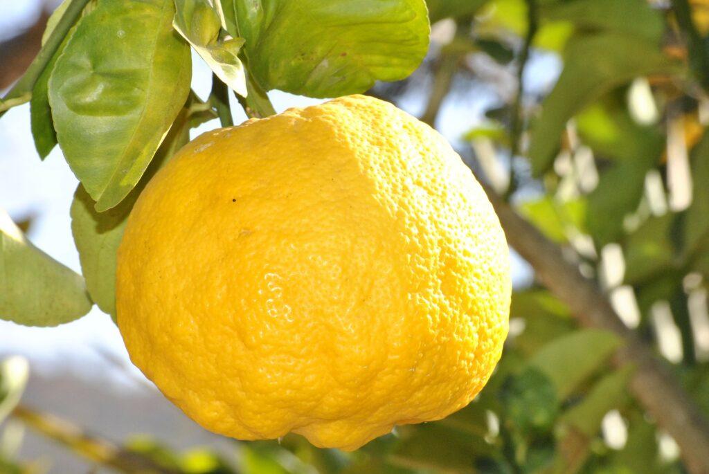 01_citrusy