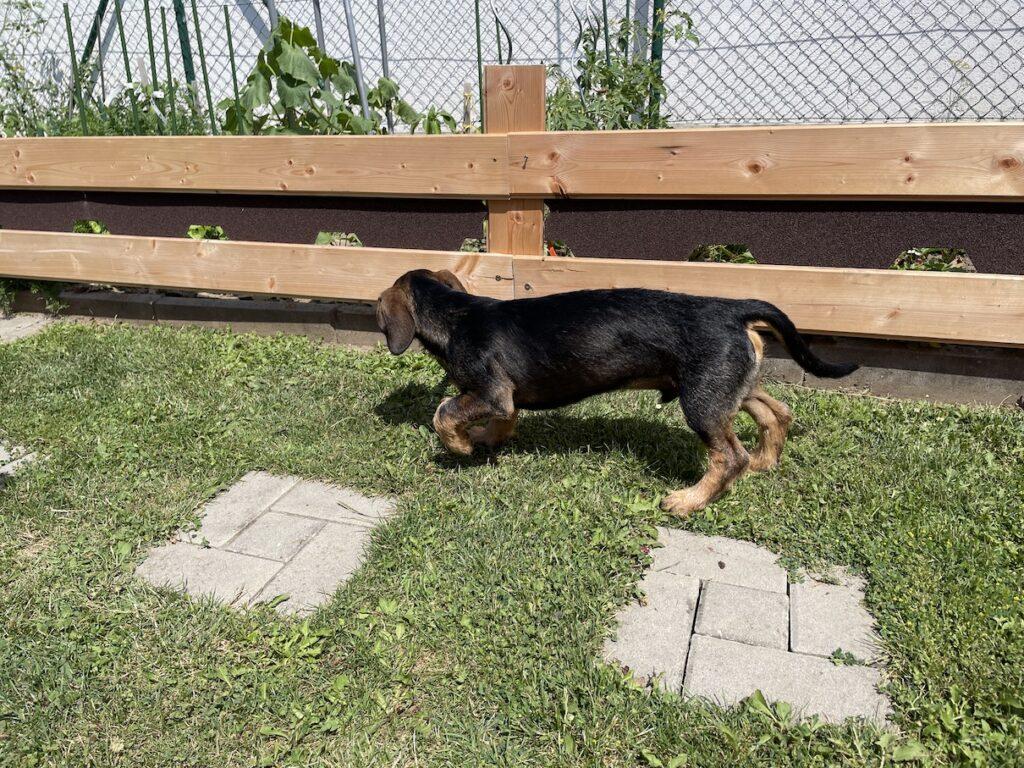 Plot pro psa