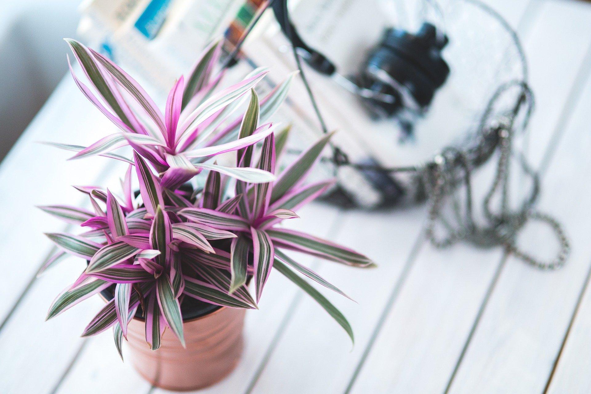 pokojové rostliny_1